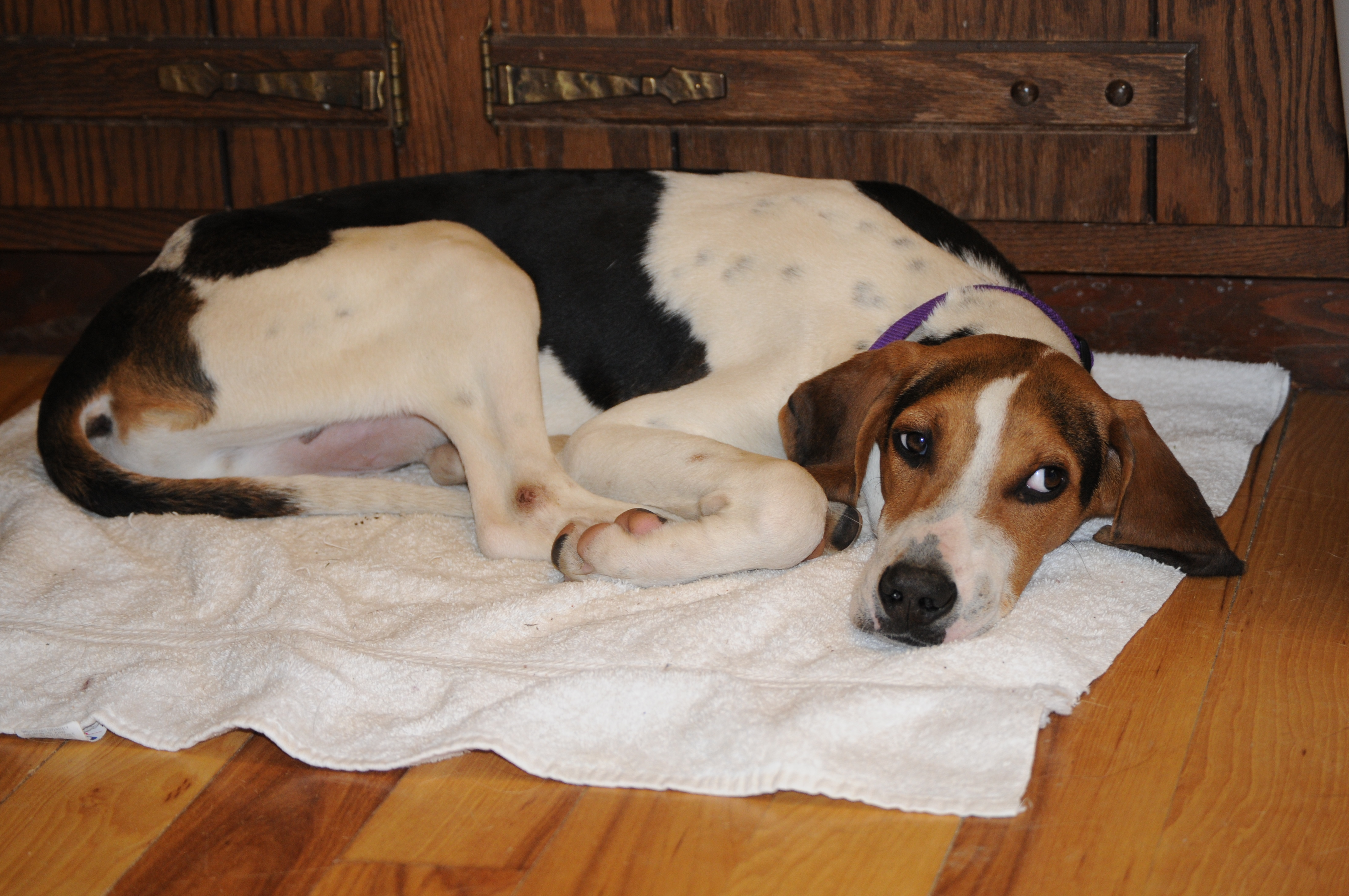 July Walker Coonhound: New Page 2 [www angelfire com
